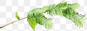 Leaf - Grasses Plant Stem Leaf Branching Family PNG
