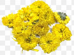 Chrysanthemum Chrysanthemum - Chrysanthemum Cut Flowers Plant PNG