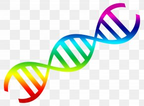 DNA Vector - DNA Nucleic Acid Double Helix Clip Art PNG