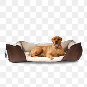 Spike - Companion Dog Puppy Bean Bag Chairs PNG