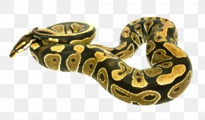 Snake - Snake Boa Constrictor PNG