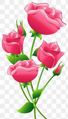 Pink Roses Transparent Clip Art Image - Rose Pink Clip Art PNG