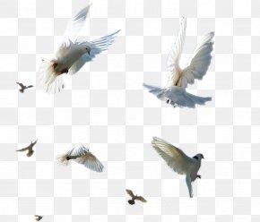 Birds Flying Element - Bird Flight Shush, Iran PNG