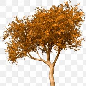 Tree - Treelet Shrub White Oak Plants PNG