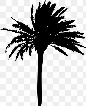 Palm Tree - Arecaceae Tree Woody Plant Sabal Palm PNG