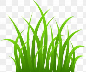 Grass Image Green Grass Picture - Grasses Clip Art PNG