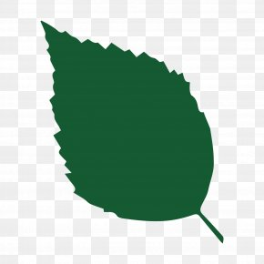 Tree Bark - Heart Of England Forest Hair Scalp Shampoo Keratin PNG