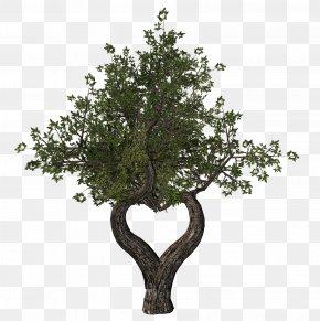 Eucalyptus - Tu B'Shevat Ansichtkaart Tree Holiday Yom Kippur PNG