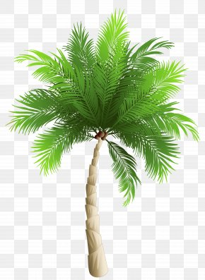 Palm Tree Clipart Image - Palm Trees Date Palm Phoenix Canariensis Coconut PNG