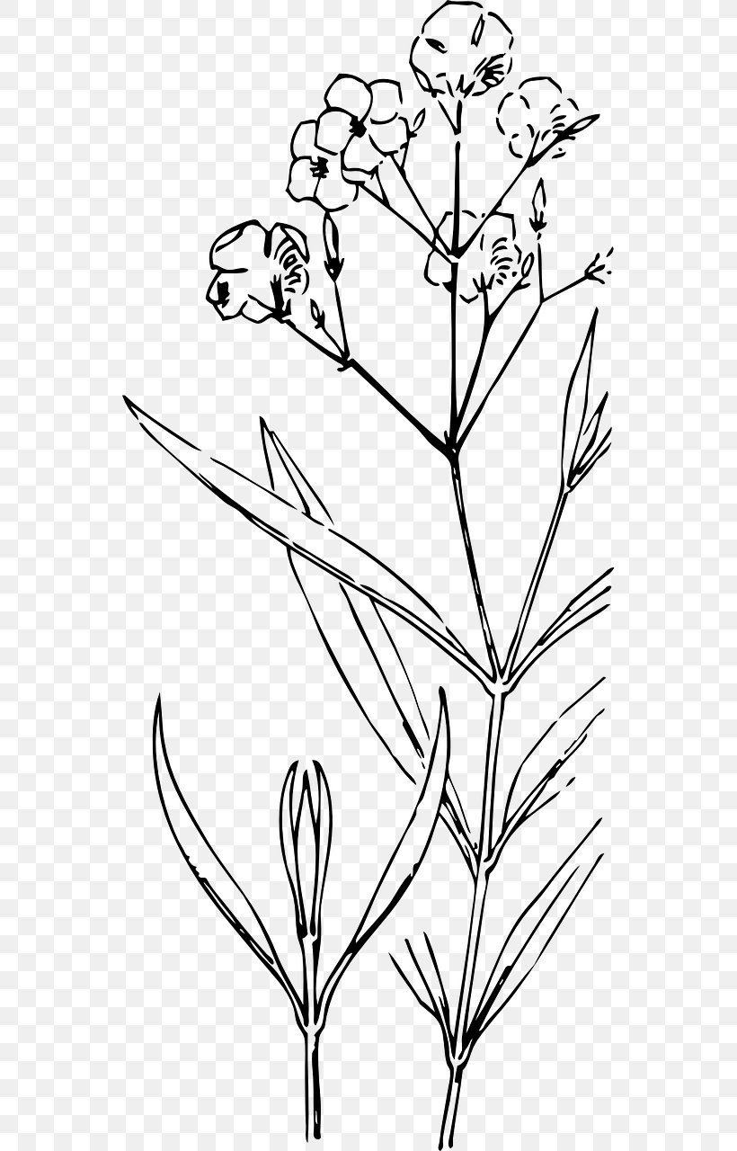 Plant Stem Drawing Flower Painting Png 640x1280px Plant Stem Black And White Bocciolo Branch Bud Download