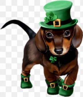 Saint Patrick's Day - Dachshund Saint Patrick's Day Puppy Art 17 March PNG