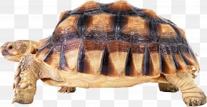 Turtle PNG - Reptile Kemp's Ridley Sea Turtle Turtle Shell PNG