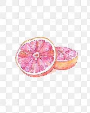 Grapefruit - Watercolor Painting Bloating Drawing PNG