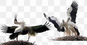 Birds Animals Stork - Bird White Stork Animal PNG