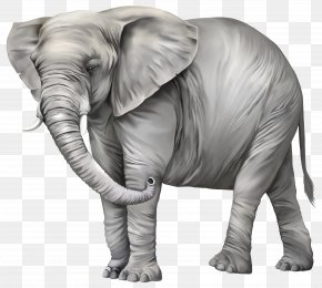 Elephant Photos - Elephant Clip Art PNG