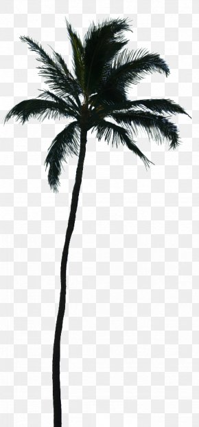 Palm Trees Tree Silhouette - Palm Trees Vector Graphics Coconut Transparency PNG