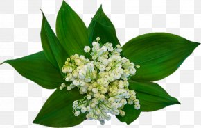 Bouquet Of Lily Of The Valley - Labour Day May 1 Lily Of The Valley International Workers Day Party PNG
