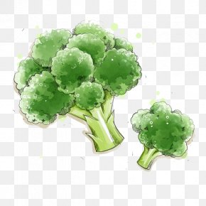 Painted Broccoli - Broccoli Vegetable Food Illustration PNG