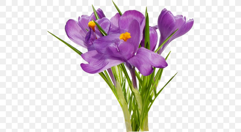 First Spring Flowers Floral Design, PNG, 500x451px, Flower, Crocus, Cut Flowers, First Spring Flowers, Floral Design Download Free