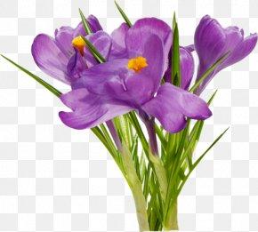 Flower - First Spring Flowers Floral Design PNG