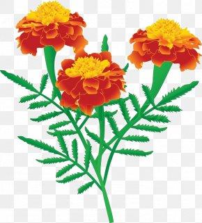 Marigold - Marigold Drawing Stock Photography Clip Art PNG