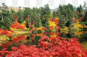 Daisetsuzan National Park Autumn - Daisetsuzan National Park Autumn Leaf Color High-definition Television Wallpaper PNG