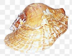 Clam Sea Snail - Snail Cartoon PNG