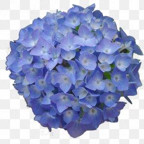 Flower - French Hydrangea Flower Garden Blue Desktop Wallpaper PNG