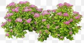 Green Bush - Shrub PhotoScape PNG