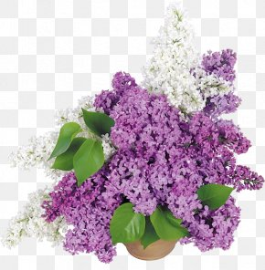 Flower Pot - Common Lilac Flower Bouquet Wallpaper PNG