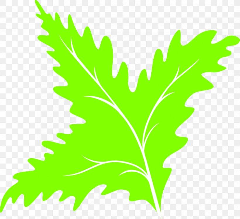 Leaf Green Clip Art, PNG, 839x768px, Leaf, Branch, Grass, Green, Leaf Vegetable Download Free