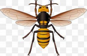 Backside Design Element - Hornet Honey Bee Vector Graphics Euclidean Vector PNG
