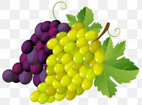 Painted Grapes Clipart - Grapevines Stock.xchng Clip Art PNG