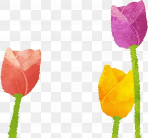 Tulip Spring Illustration Material - Tulip Illustration PNG