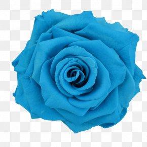 Blue Flower - Blue Rose Flower Preservation PNG