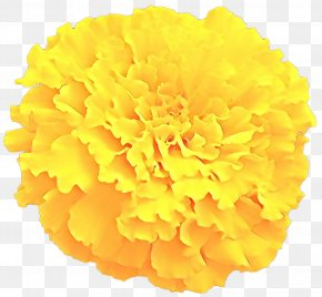 Clip Art Toran Image Flower PNG