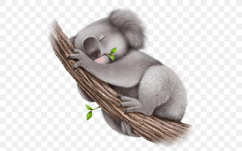Koala Wallpaper, PNG, 512x512px, Koala, Animal, Computer Software, Cuteness, Digital Image Download Free