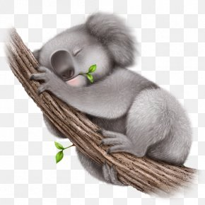 Koala - Koala Wallpaper PNG