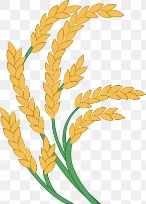 Golden Rice - Rice Paddy Field Icon PNG