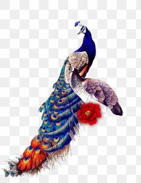 Classical Peacock - Peafowl Bird IPad Mini Samsung Galaxy J7 Glass PNG