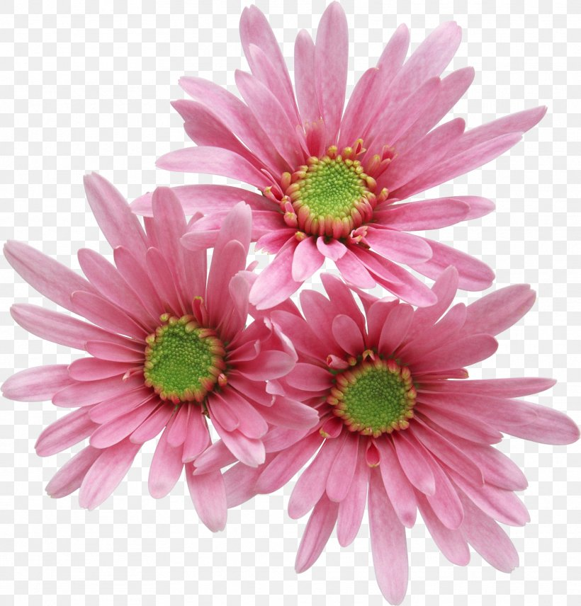Pink Flowers Rose, PNG, 1869x1953px, Pink Flowers, Annual Plant, Aster, Chrysanths, Cut Flowers Download Free