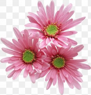 Pink Gerbera - Pink Flowers Rose PNG