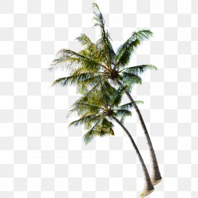 Coconut Tree On The Summer Beach - Beach Tree Coconut PNG