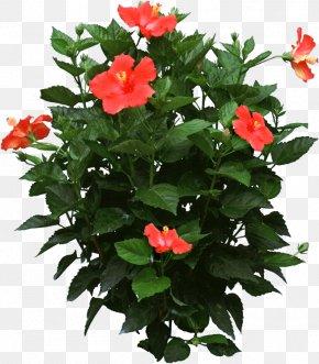 Pot Plant - Shoeblackplant Houseplant Flower Plants In Winter PNG