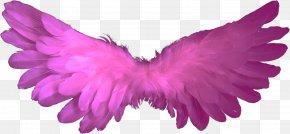 Wings - Angel Clip Art PNG