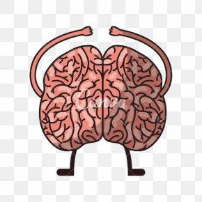 Brain - Human Brain Homo Sapiens Agy PNG