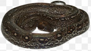 Snake - Boa Constrictor Rattlesnake Constriction Vipers PNG