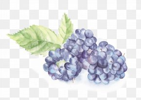 Small Fresh Hand-painted Watercolor Blackberry Fruit - Watercolor Painting Download Illustration PNG