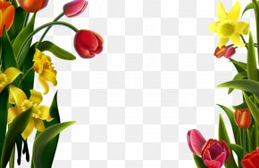 Tulips Decorative Lace - Picture Frame Download PNG