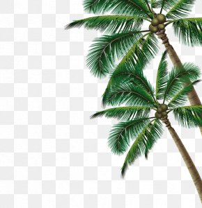 Coconut Tree - Summer Poster Beach PNG